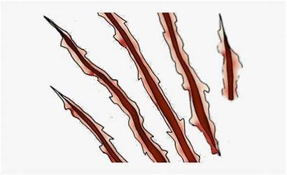 Claw Clipart Rip Marks Scratches Transparent Scar