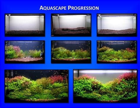 Aquascaping Techniques aquascape of the month march 2009 quot patchwork