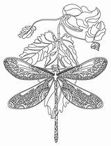 Dragonfly Coloring Pages Adult Dragonflies Zentangle Mandala Animal Flower Rocks Adults App Printable Colouring Colour Lds Zentangles sketch template