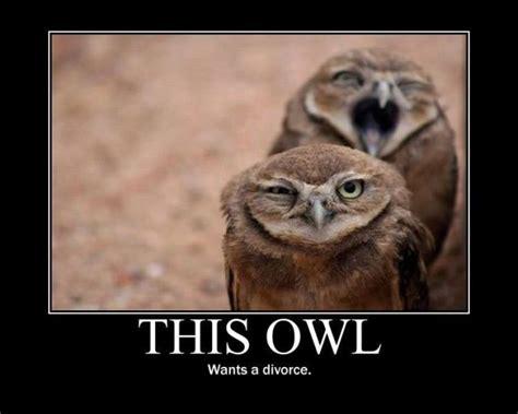 Funny Owl Meme - russ caslis jokes