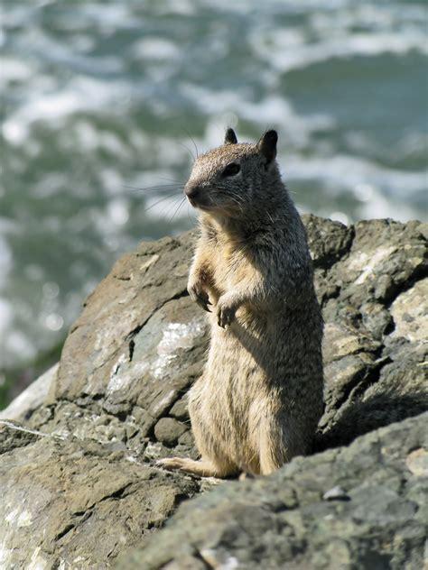 ground squirrels eat wwwwhatdosquirrelseatorg