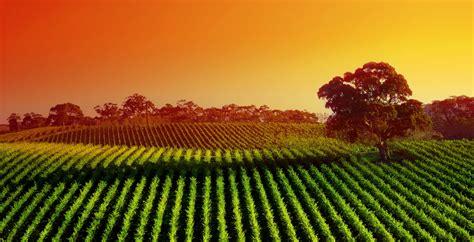 Wordpress Headers vinyard  zealand field tree bauhaus demo 3000 x 1534 · jpeg