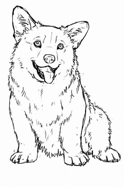 Corgi Coloring Pages Puppy Clipart Printable Outline
