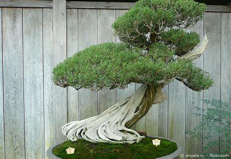bonsai baum pflege garten bonsai baum pflanzen pflegen garten hausxxl garten hausxxl