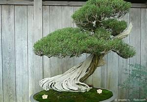 garten bonsai baum pflanzen pflegen garten hausxxl With französischer balkon mit garten bonsai baum