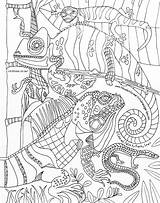 Coloring Visitar Lizards Kathy Sturr Drawn Lounge Artist Hand sketch template