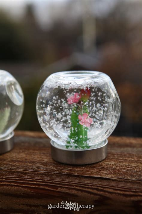 succulent snow globe    star   collection