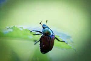 Insektenschutztür Zum Schieben : insektenschutz schiebet r professioneller schutz vor insekten ~ Orissabook.com Haus und Dekorationen