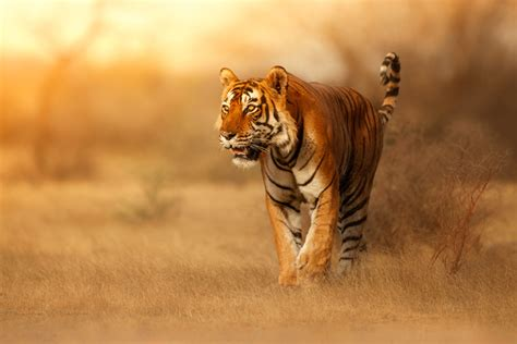 Nature Wallpaper with Wild Animals