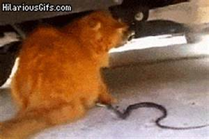 Snake trying to bite a cat`s tail | HilariousGifs.com