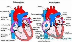 Реферат на тему артериальная гипертония бесплатно