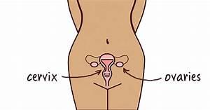 Cervical Cancer Vs  Ovarian Cancer  U2013 Understanding The