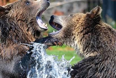 Wild Animals Bears Water Fauna