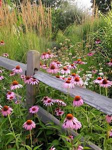 Plant Wildflowers in Your Garden and Keep Them Tidy and ...