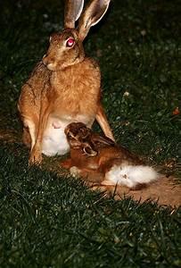 Rabbit feeding baby | taken in Stuttgart. So I just had a ...