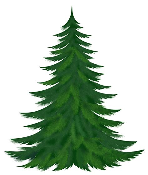 pictures of small palm trees pine tree clipart clipartix