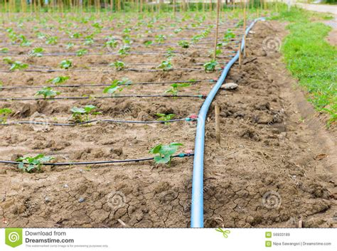 Drip Irrigation System Royalty-free Stock Photography