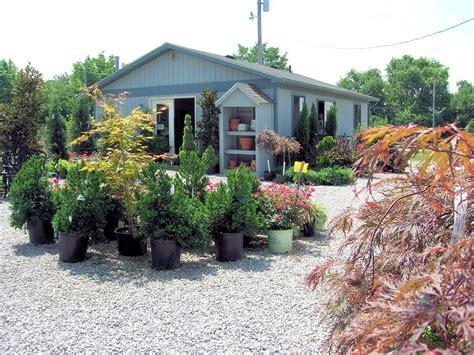 youngs garden center garden center tree nursery in nicholasville ky glynn
