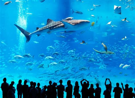 largest aquarium in the world the fish tank that s so big it can hold four whale sharks daily mail