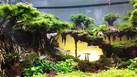 Setting Aquascape by Aquascape Sunset