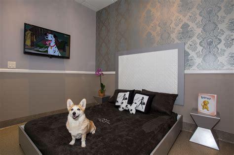Luxury Pet Hotels Dogs