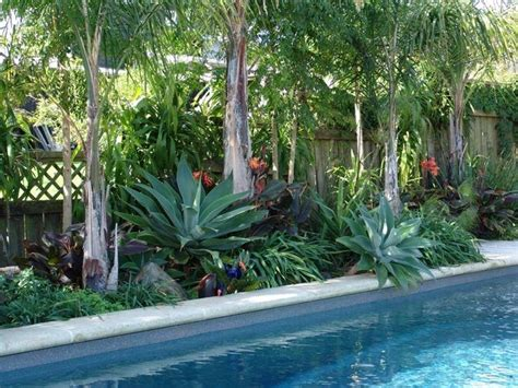 plants around pools the 25 best tropical pool landscaping ideas on pinterest pool plants tropical backyard and