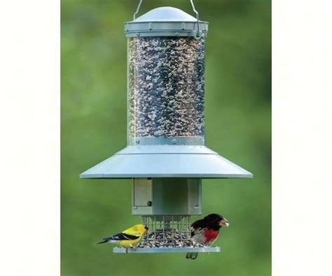 auto feeder automatic dispensing bird feeder feed birds