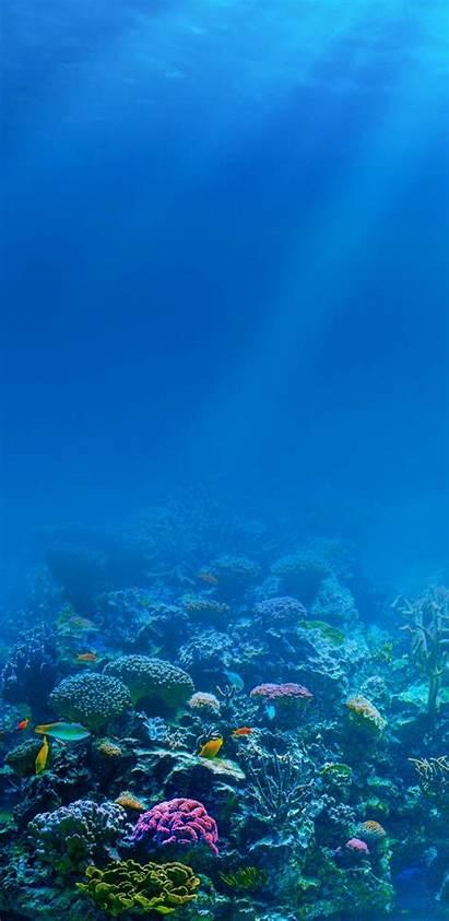 Underwater Iphone Wallpapers Iphones Nature