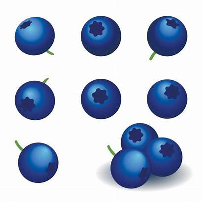 Blueberry Vector Icons Illustration Berry Clip Illustrations