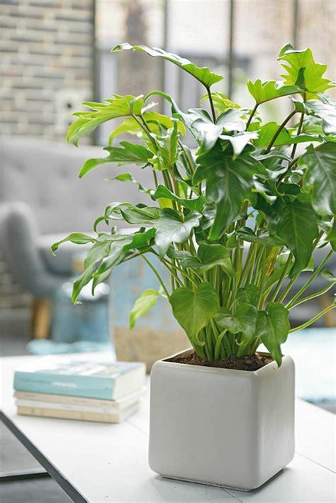 Zimmerpflanzen Feng Shui by Feng Shui Pflanzen F 252 R Harmonie Und Positive Energie Im
