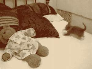 Cat Man Do | Dr. Arnold Plotnick: Here's 24 Cute Funny ...
