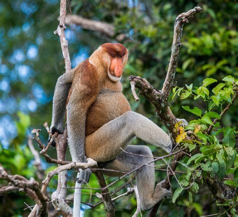 This List of Endangered Rainforest Animals Will Really