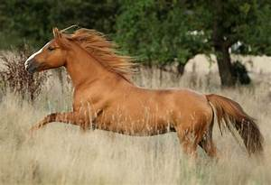 75 entries in Cool Horse Wallpapers group