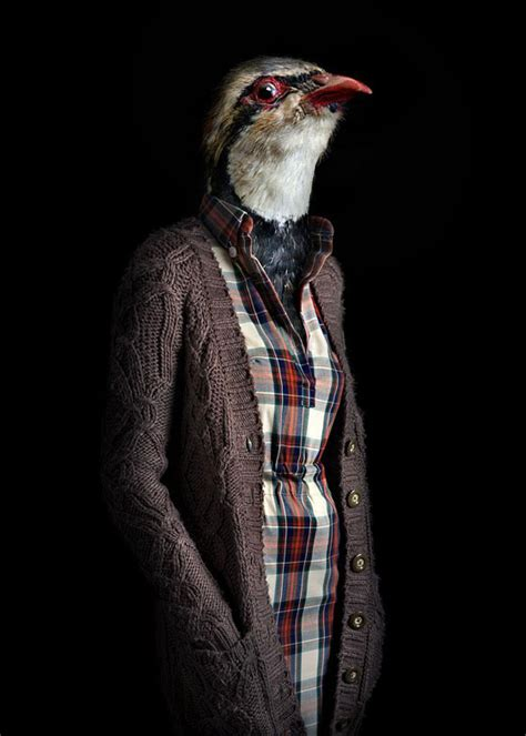 skins unusual photo series  dressed  animals