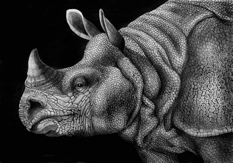 Detailed Image Detailed Ink Animal Drawings 4 Fubiz Media