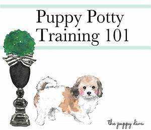 7 best australia funny images on pinterest australia for Dog potty training problems