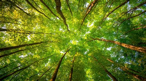 foliage of trees wallpaper trees 5k 4k wallpaper 8k sunlight leaves forest branches os 5348