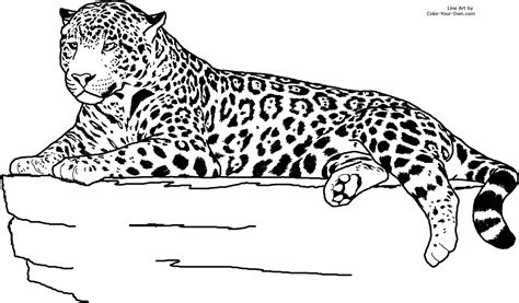 Coloring Jaguar by Jaguar Laying Coloring Page
