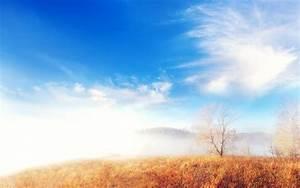 Trees, Cloud, Fog, Landscape, Wallpapers