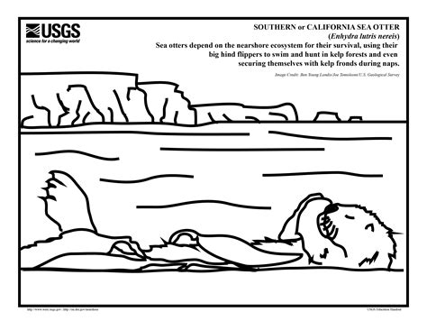 A Sea Otter Coloring Page For The Pups In Your Life