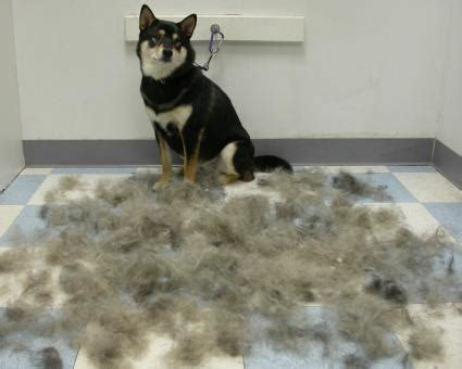 hair shedding solutions pet fur for shedding poses solution to spill tails