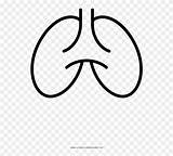 Lungs Coloring Clipart Line Pinclipart sketch template
