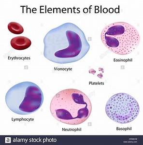 The Cells Of Human Blood   Red Blood Cells And Different
