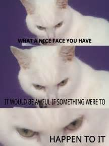 hairless cat meme evil hairless cat memes