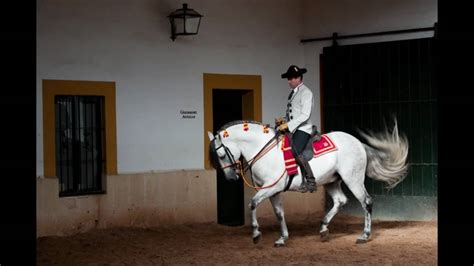 jerez dancing horses andalucia