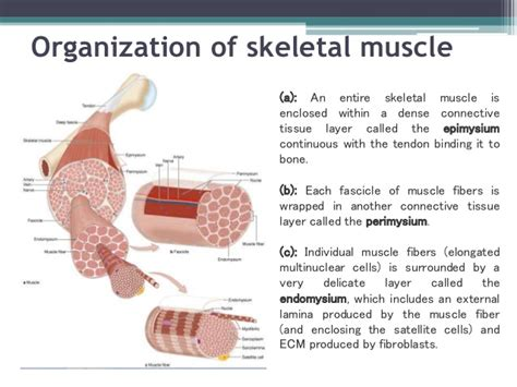 histology of tissue