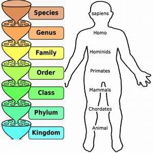 Sapiens Classification Chart Science