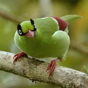 Critically Endangered Birds
