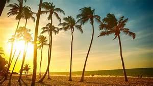 Tropical beach beautiful sunset, palm tree, sea, people ...