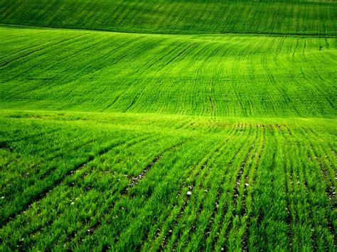 Beautiful Green Grass Wallpapers  Wallpaper Hd